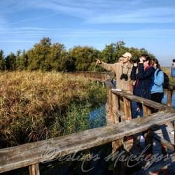 LAS TABLAS DE DAIMIEL (Parque Nacional) Visita guiada senderista
